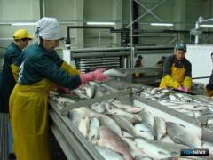 Required rybodobytchikami and the fishermen of Kamchatka, Sakhalin, the Kuril Islands. PU