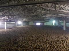 Семенной и продовольственный качественный картофель